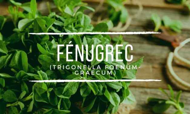 Fenugrec : Vertus santé, Formes d'utilisation & Posologie